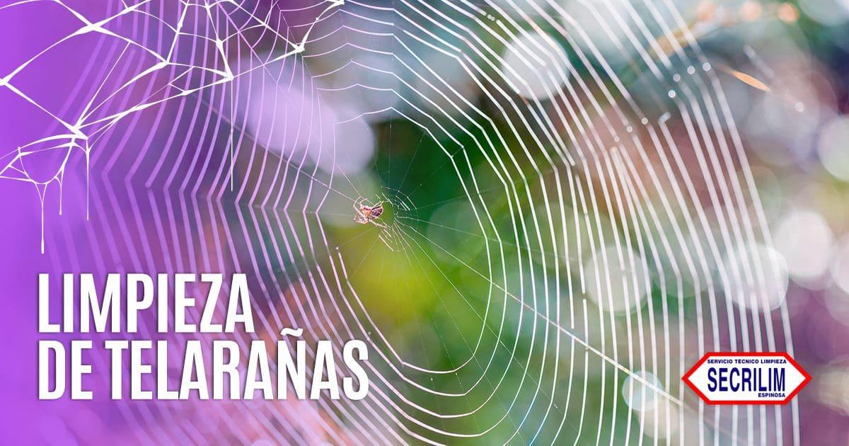 Telarañas: cómo eliminarlas y evitarlas